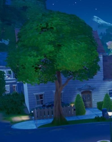ソルティ・スプリングスの木