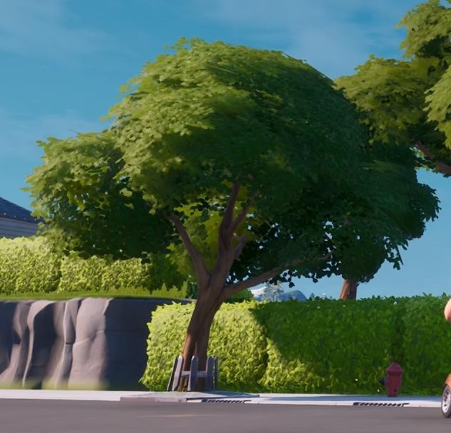 ホーリー・ヘッジスの木